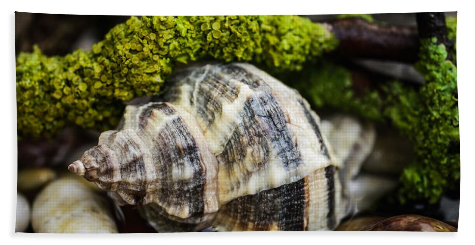 Whelk Bath Sheet featuring the photograph Whelk I by Marco Oliveira