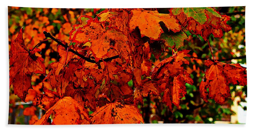 Orange Leaves Bath Sheet featuring the photograph Where Has All The Red Gone - Autumn Leaves - Orange by Barbara Griffin