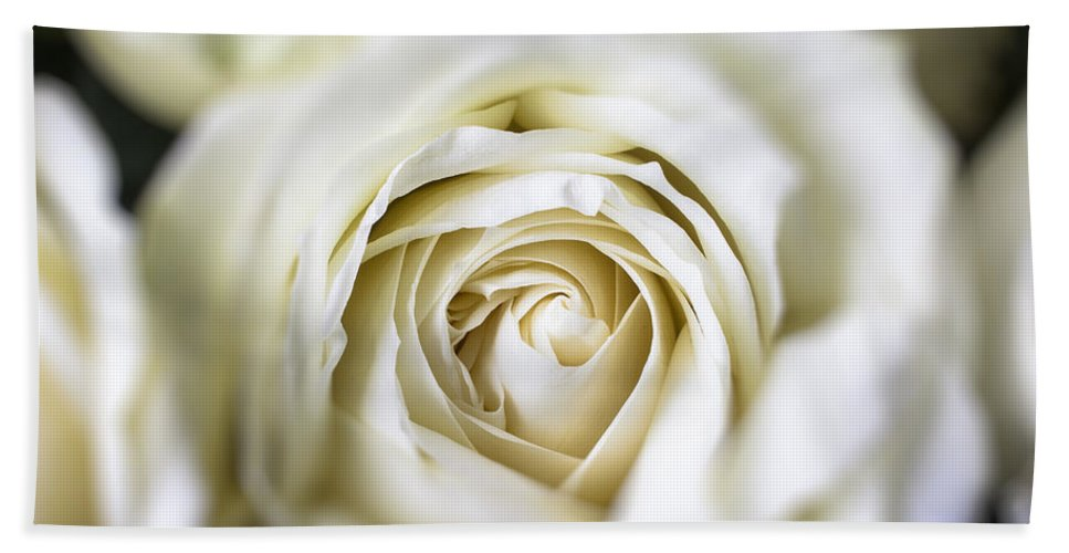 White Bath Sheet featuring the photograph Whie Rose Softly by Garry Gay