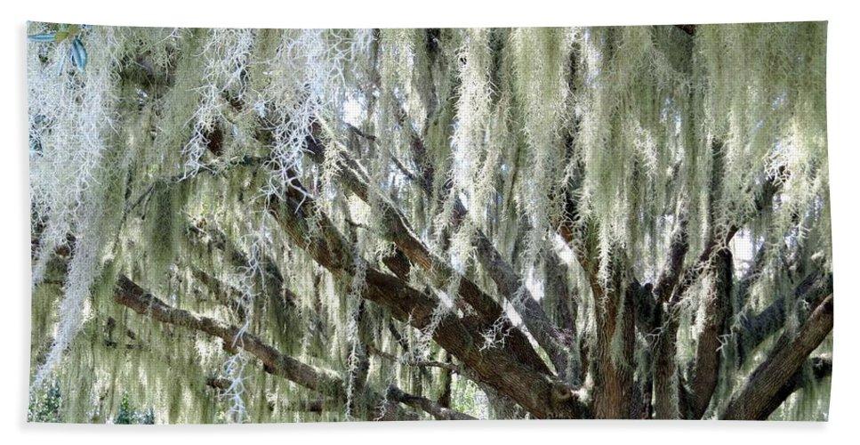 Oak Tree Hand Towel featuring the photograph Whispering Oaks by Zina Stromberg
