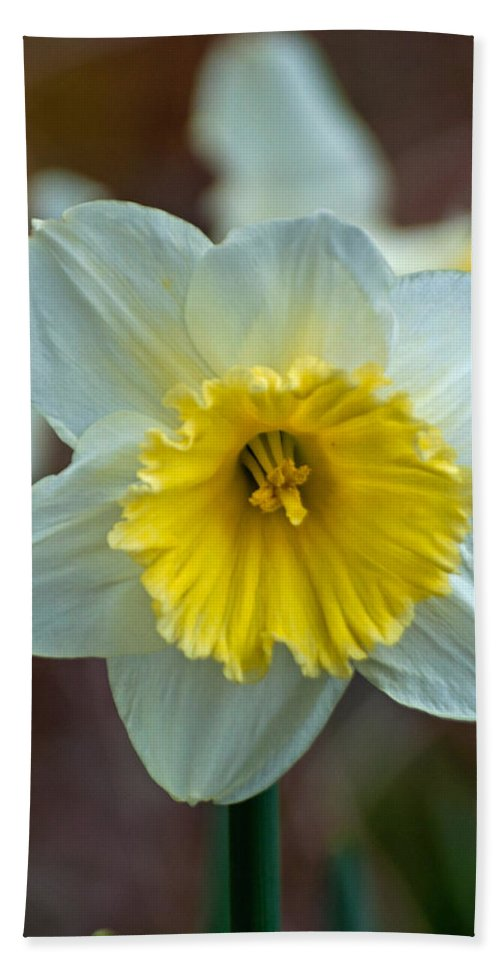 Passover Flower Hand Towel featuring the photograph White And Yellow Daffodil by Tikvah's Hope