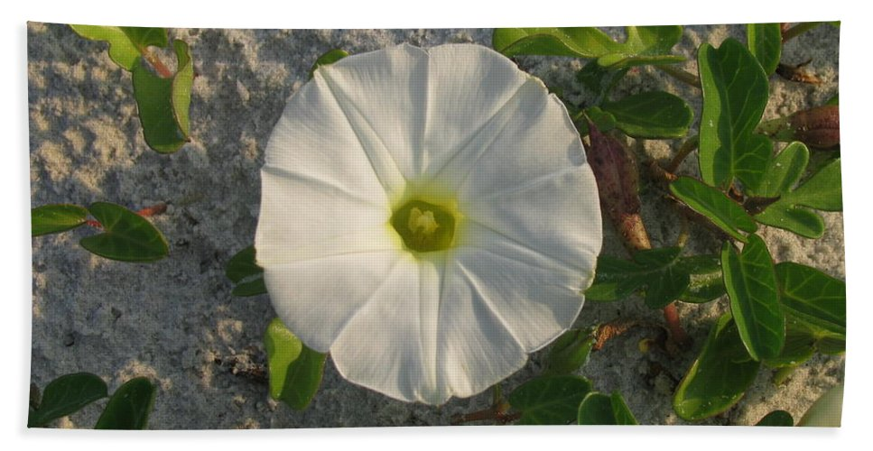 Landscape Hand Towel featuring the photograph White Beach Flower by Ellen Meakin