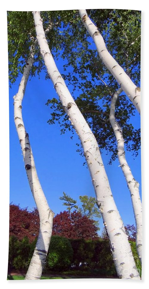 Birch Trees Bath Sheet featuring the photograph White Birch Blue Sky by Ed Weidman