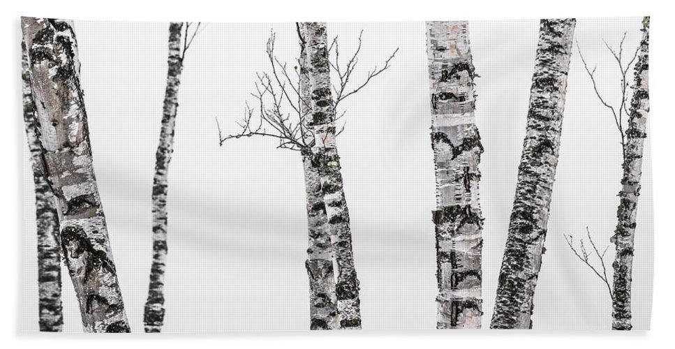 Birch Bath Sheet featuring the photograph White Birches by Tim Kirchoff