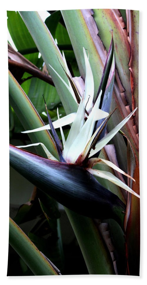 Tropical Bath Sheet featuring the photograph White Bird Of Paradise by Donna Walsh