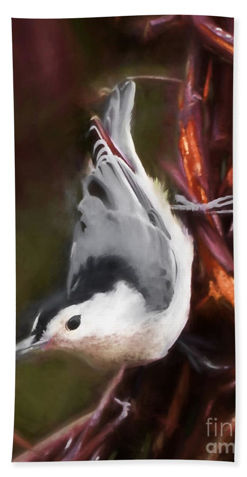 White-breasted Nuthatch Hand Towel featuring the photograph White-breasted Nuthatch - Classic Pose by Kerri Farley