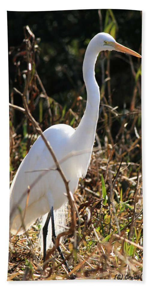 Egret Hand Towel featuring the photograph White Brilliance Of The Egret by Crystal Heitzman Renskers