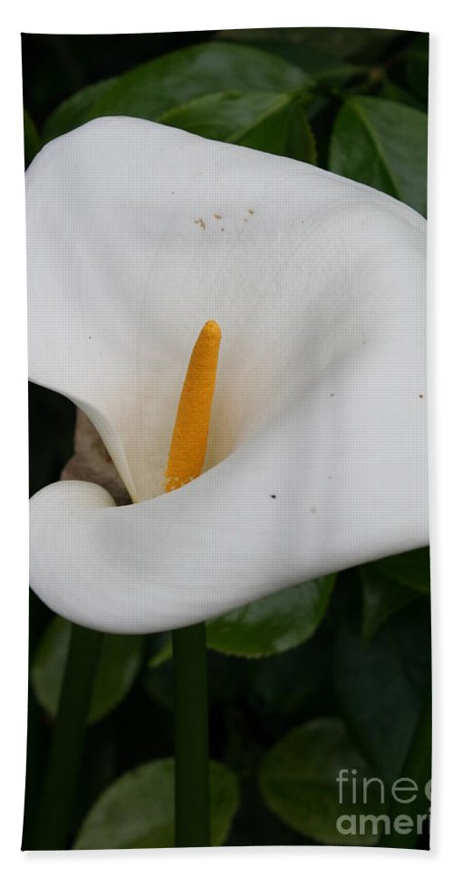 White Calla Hand Towel featuring the photograph White Calla Lilly by Christiane Schulze Art And Photography