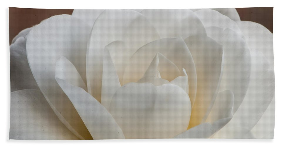 White Hand Towel featuring the photograph White Camellia by Randy Walton