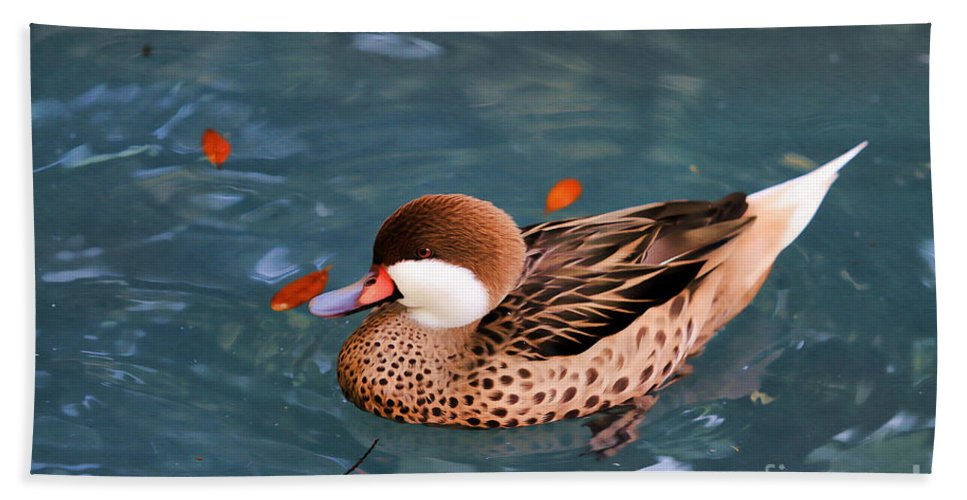 Duck Hand Towel featuring the photograph White-cheeked Pintail by Deborah Benoit