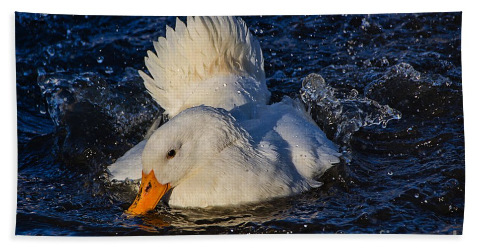 Duck Hand Towel featuring the photograph White Duck 3 by Susie Peek