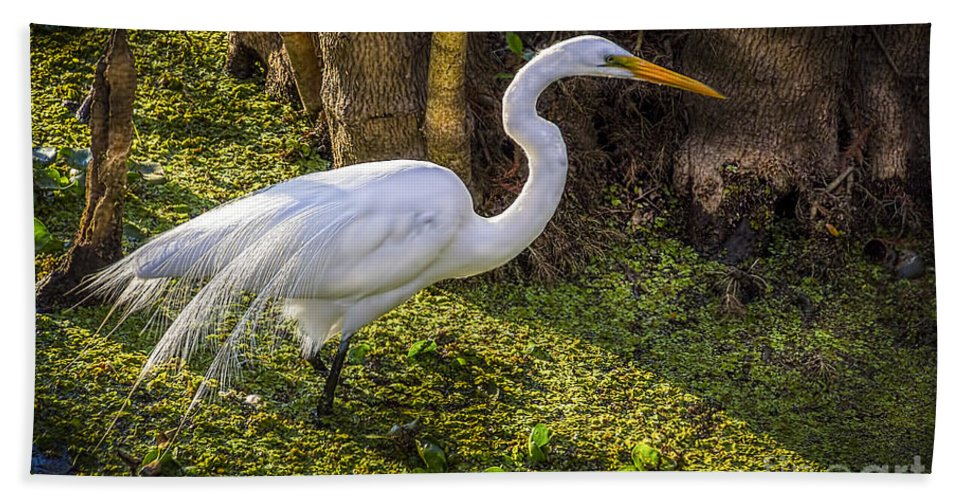 White Egret Hand Towel featuring the photograph White Egret On The Hunt by Marvin Spates