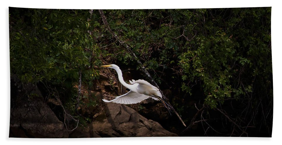 Bird Bath Sheet featuring the photograph White Egret's Approach  #0615 by J L Woody Wooden