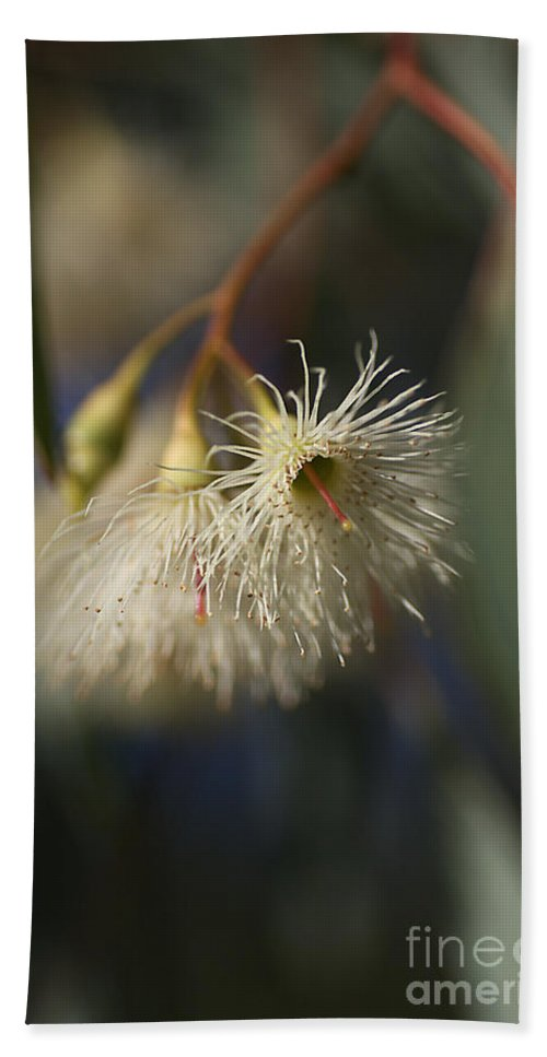 White Eucalyptus Flowers Hand Towel featuring the photograph White Eucalyptus by Joy Watson
