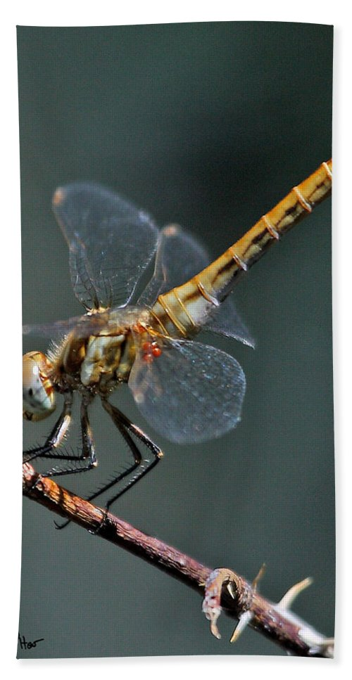 Nature Bath Sheet featuring the photograph White-faced Meadowhawk by David Salter