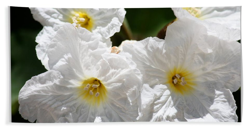 White Bath Sheet featuring the photograph White Flowers In The Desert by Carol Groenen