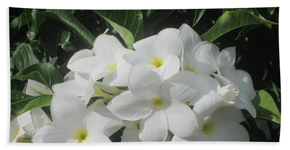 Flowers Hand Towel featuring the photograph White Flowers by Jo Jurkiewicz
