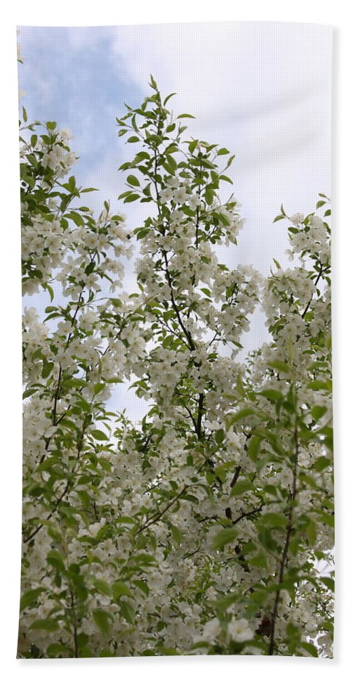 Flower Bath Sheet featuring the photograph White Flowers On Branches by Michelle Miron-Rebbe