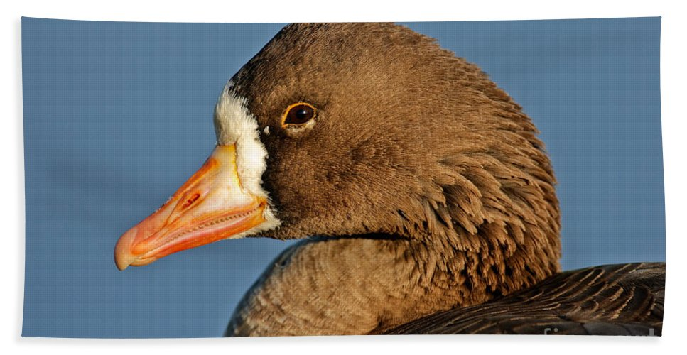 Greater White-fronted Goose Hand Towel featuring the photograph White-fronted Goose by Anthony Mercieca