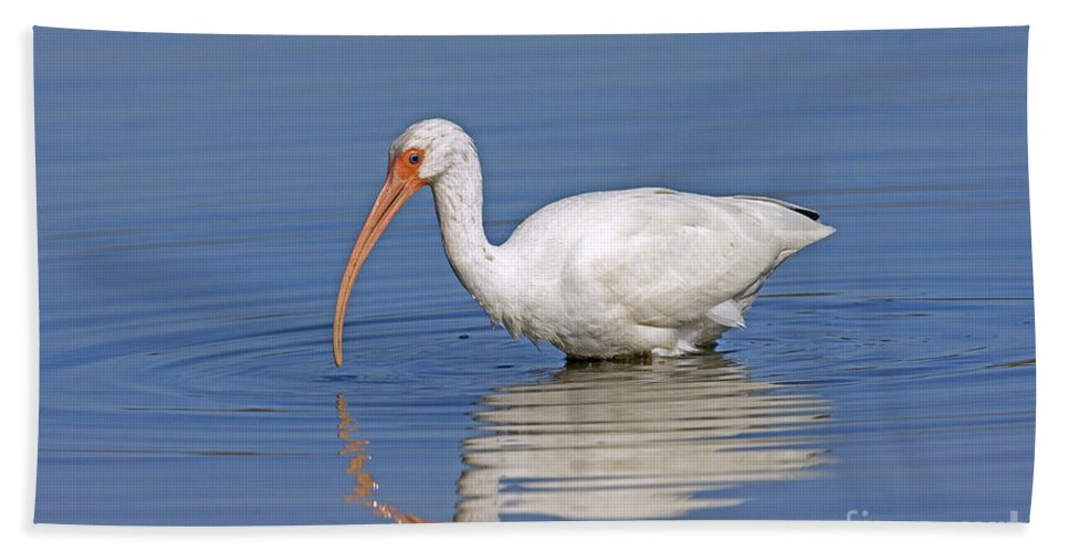 White Ibis Hand Towel featuring the photograph White Ibis by Anthony Mercieca