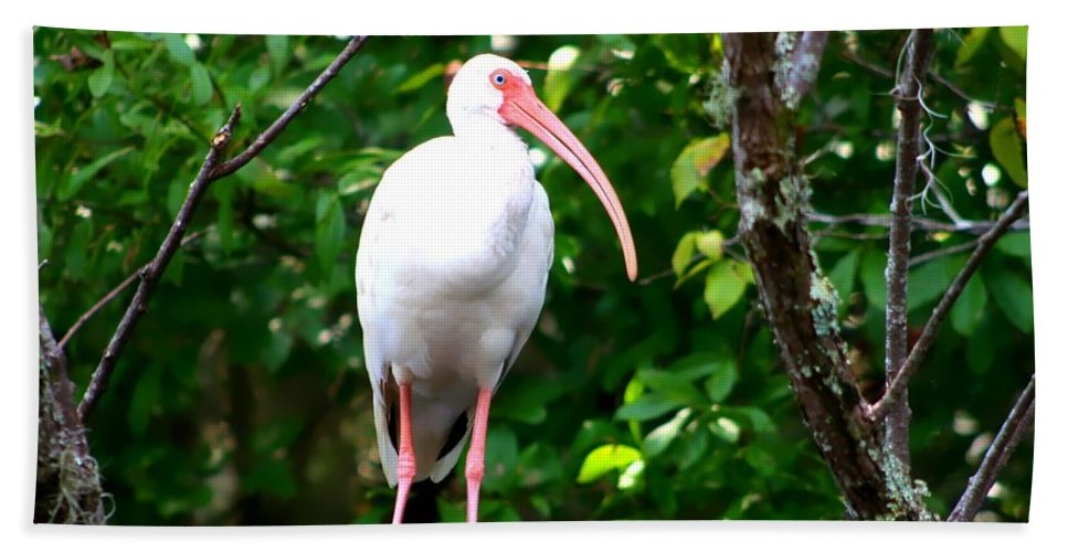 Florida Birds Hand Towel featuring the photograph White Ibis by Debra Forand
