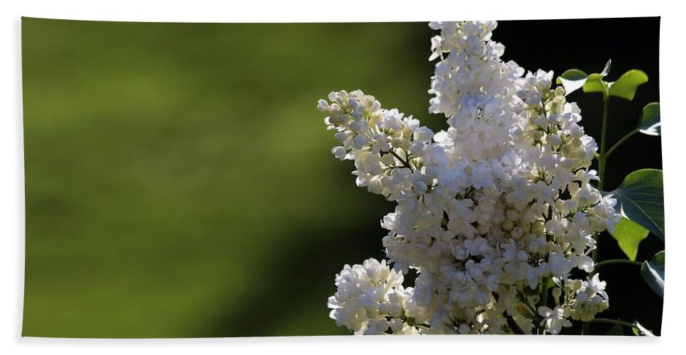 Lilac Bath Sheet featuring the photograph White Lilac by Kenny Glotfelty