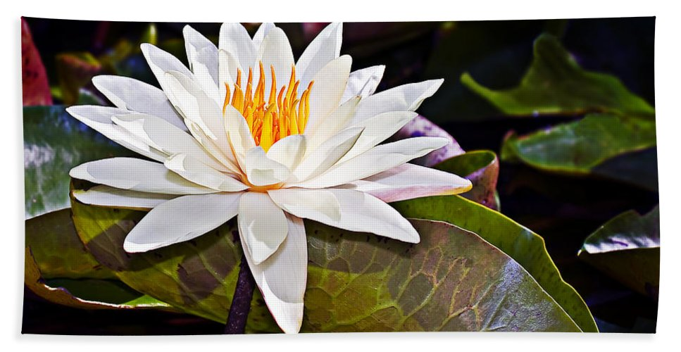 Floral Bath Sheet featuring the photograph White Lotus Flower by Marcia Colelli