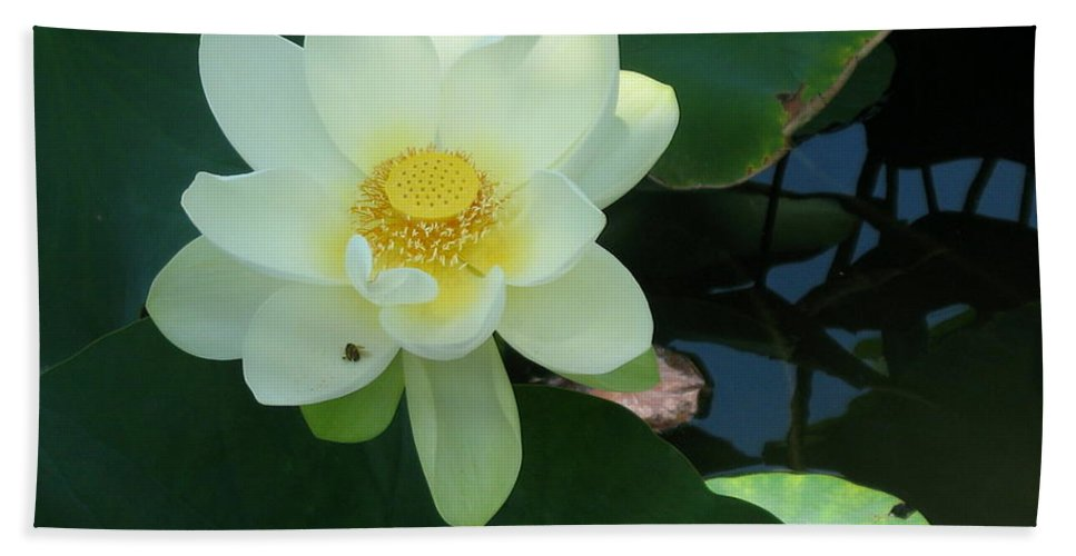 White Lotus Hand Towel featuring the photograph White Lotus I by Christiane Schulze Art And Photography