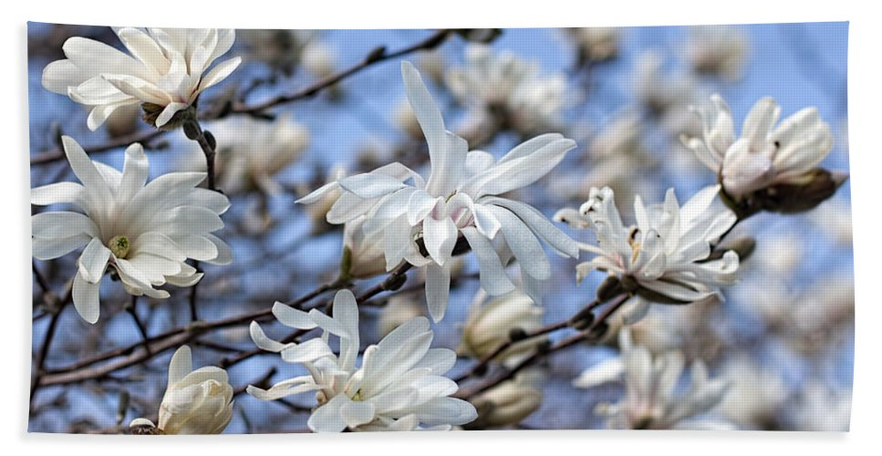 Magnolia Bath Sheet featuring the photograph White Magnolia Magnificence by Barbara McMahon