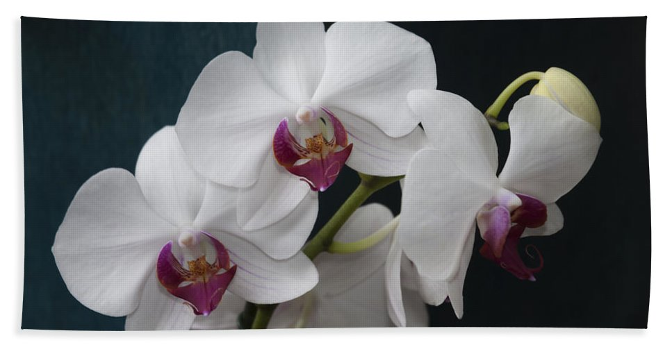 White Bath Sheet featuring the photograph White Orchids by Dennis Reagan
