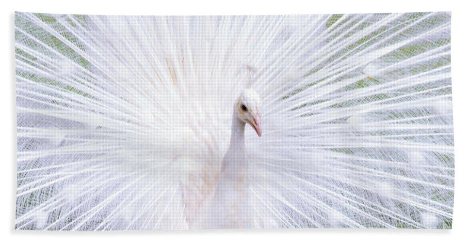 Pou Hand Towel featuring the photograph White Peacock by Lj Lambert