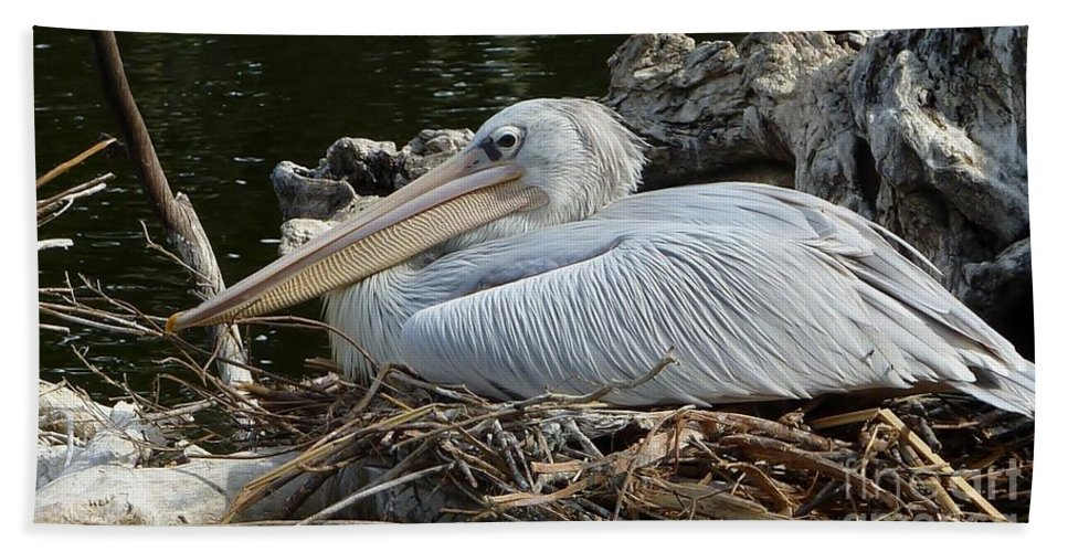 White Pelican Hand Towel featuring the photograph White Pelican 1 by Susan Garren
