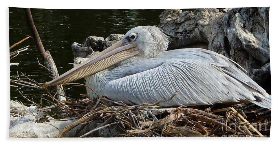 White Pelican Bath Sheet featuring the photograph White Pelican 1 by Susan Garren