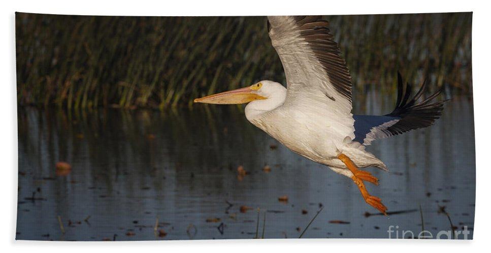 White Pelican Bath Sheet featuring the photograph White Pelican 198 by Maria Struss