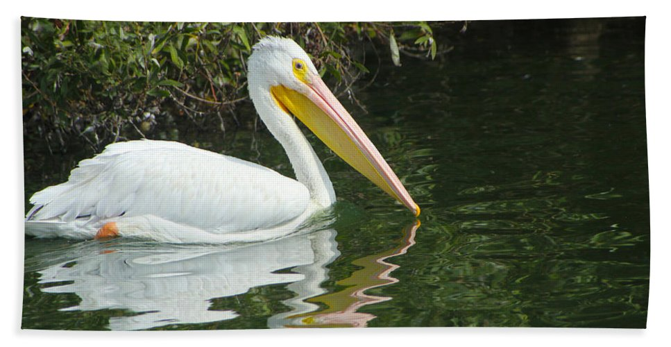 White Pelican Hand Towel featuring the photograph White Pelican by Diana Haronis