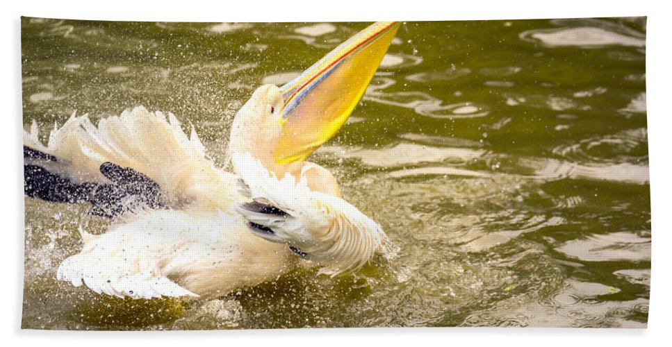 Adult Bath Sheet featuring the photograph White Pelican by Jijo George