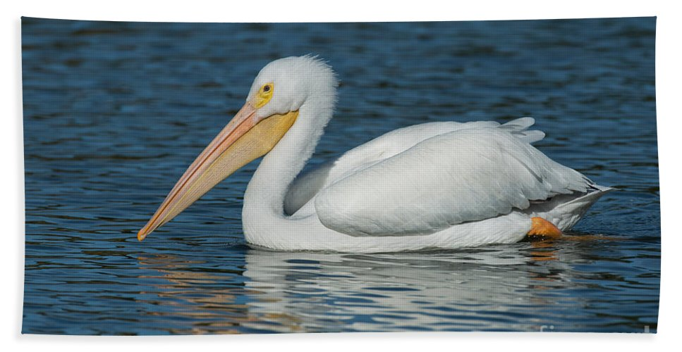 American White Pelican Hand Towel featuring the photograph White Pelican Swimming by Anthony Mercieca