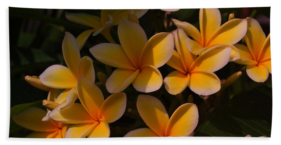 Tropical Garden Hand Towel featuring the photograph White Plumeria by Miguel Winterpacht