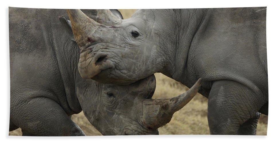 Hiroya Minakuchi Bath Towel featuring the photograph White Rhino Males Fighting Solio Game by Hiroya Minakuchi