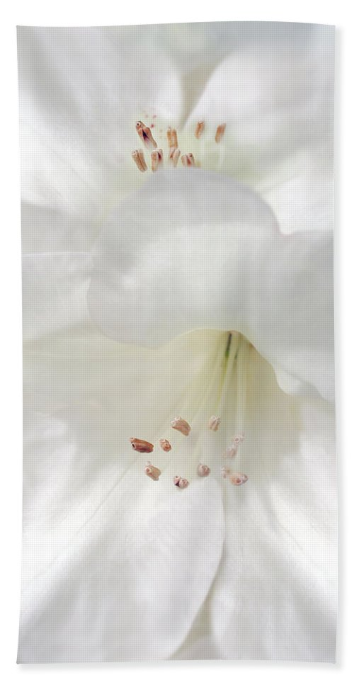 Rhododendron Hand Towel featuring the photograph White Rhododendron Flowers by Jennie Marie Schell