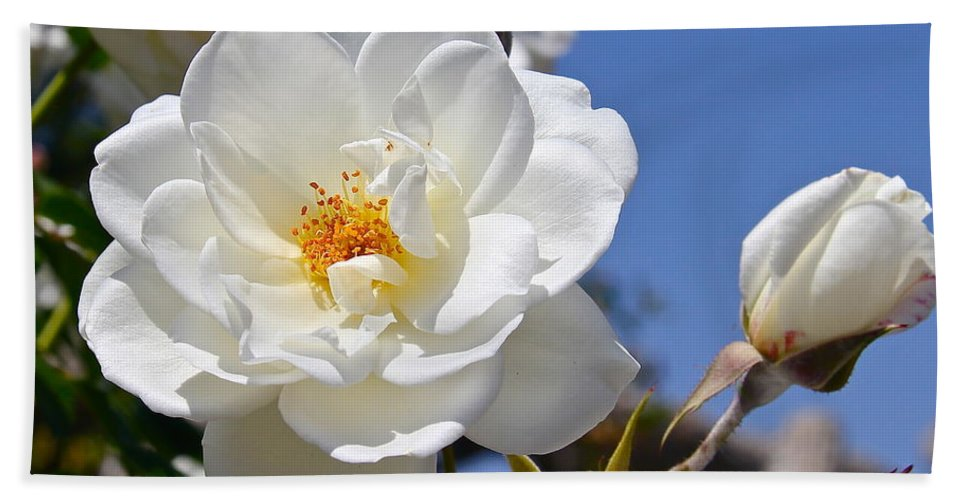Rose Hand Towel featuring the photograph White Rose by Denise Mazzocco