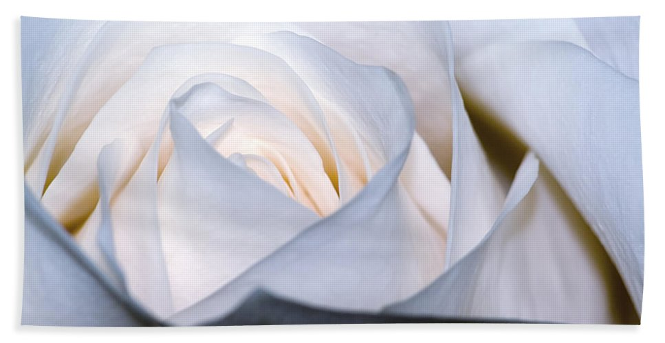 Color Bath Sheet featuring the photograph White Rose by Jim Shackett