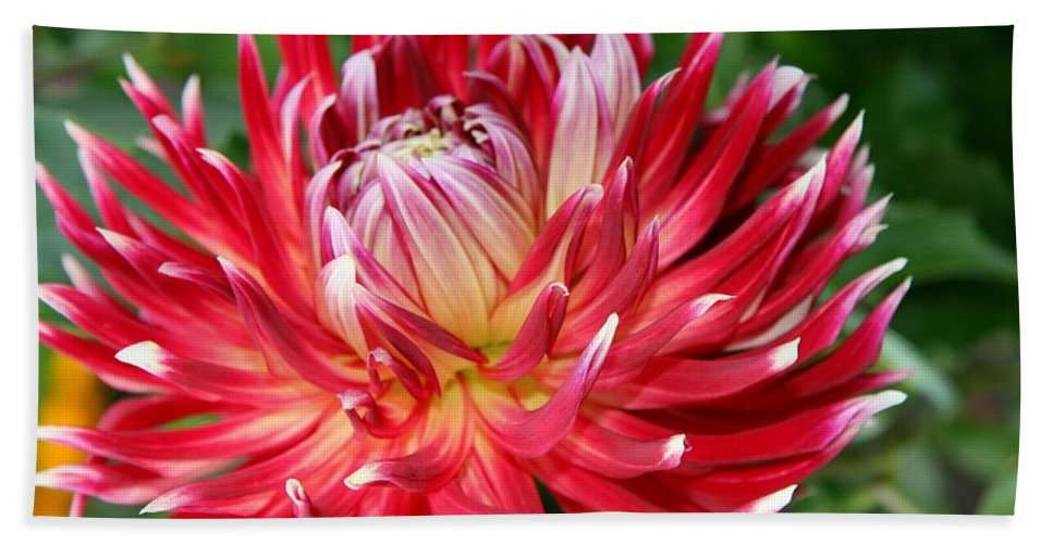 Dahlia Hand Towel featuring the photograph White Spires by Christiane Schulze Art And Photography