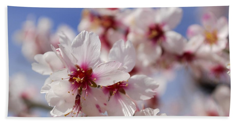 Flower Hand Towel featuring the photograph White Spring Almond Flowers by Guido Montanes Castillo