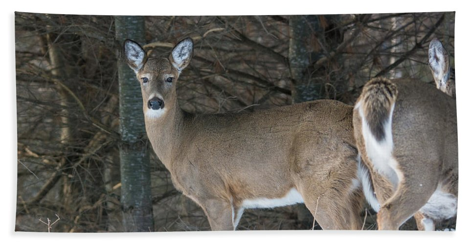 Landscape Hand Towel featuring the photograph White-tailed Deer by Cheryl Baxter