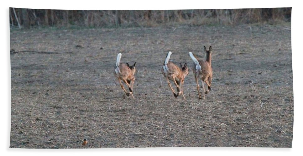 White Tailed Deer Running Bath Sheet featuring the photograph White Tailed Deer Running by Dan Sproul