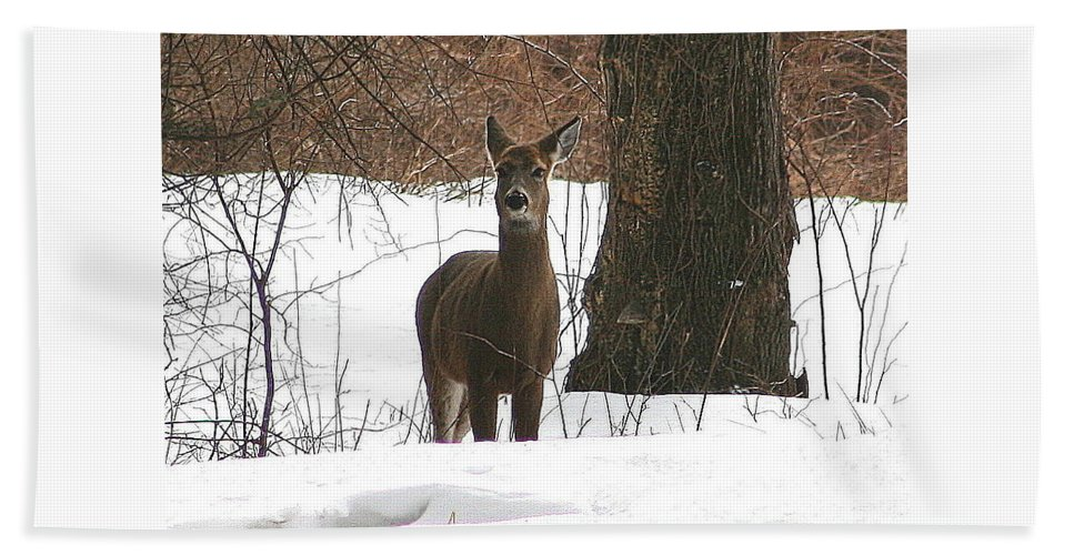 Deer Bath Sheet featuring the photograph White-tailed Winter Stand by Neal Eslinger