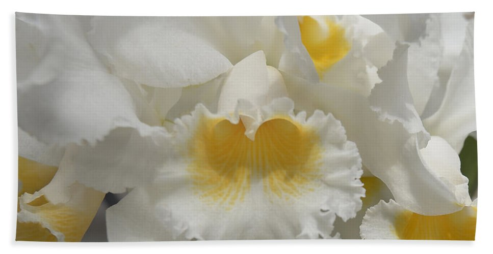 Orchid Bath Sheet featuring the photograph White by Terri Winkler