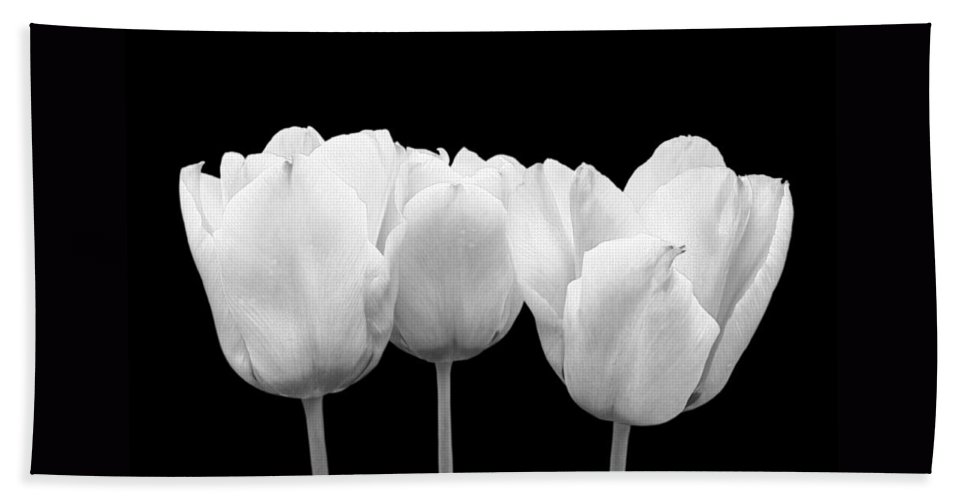 Tulip Hand Towel featuring the photograph White Tulip Triple On Black by Gill Billington