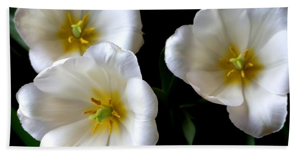 Nature Hand Towel featuring the photograph White Tulips by Charles Ford